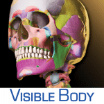 visible body icon